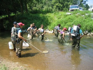 A field crew in waders samples with electroshockers, catch nets, and buckets.
